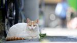 ソニーのフラッグシップ「α1」の猫瞳AFで不意の仕草も見逃さない