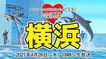 シーパラのリニューアルを語る:LOVE横浜#3