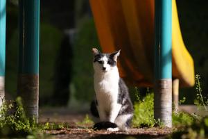ソニー「α1」で猫撮影・最終章! これは動物を撮影する人には危険なカメラだ