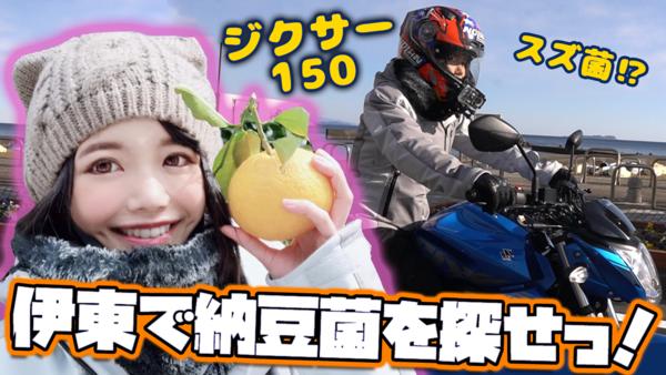 スズ菌バイク「ジクサー150」で納豆菌を堪能しに伊豆・伊東への旅