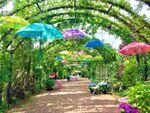 アジサイとカラフルな傘の組み合わせが綺麗!「アジサイフェスティバル」横浜イングリッシュガーデンで5月29日から開催