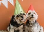 主役は愛犬! ペットの誕生日をお祝いできる宿泊プラン、キンプトン新宿東京