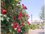 公園産はちみつがおいしそう! 横浜市アメリカ山公園で6月11日・12日「フラワー&グリーンマーケット」を開催