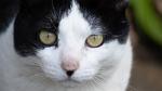 デジカメで猫を撮ったら、猫の瞳は丸い方が可愛かった!