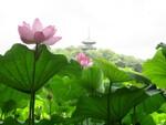三溪園が「早朝観蓮会」を開催、7時からの特別朝食メニューやツアーを実施