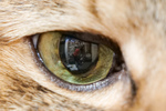 望遠レンズで近距離撮影「テレマクロ」で猫の顔アップ大作戦