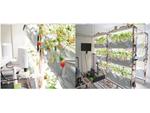 イチゴの自動栽培ロボット研究施設が東大に完成