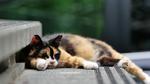 パナソニックの「テレマクロ」でとろけている猫たちを激写!