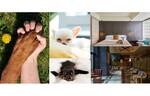 愛犬に癒しのひと時をプレゼント キンプトン新宿東京「ワンちゃんリフレ&一緒に食べるブランチ付き宿泊プラン」を実施中