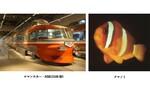 オレンジ色の魚たちがロマンスカーミュージアムやってくるぞ! 新江ノ島水族館との初コラボ企画「オレンジ色のロマンス展」開催