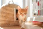 2021年前半をハイエンドカメラと保護猫シェルターの猫で振り返る