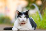 真夏の猫を快適に撮影すべく早朝にオリンパス「E-M1 II」持って出発!
