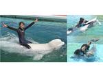 イルカと泳ぐ夢が叶う! 横浜・八景島シーパラダイスで「イルカ・シロイルカとおよごう」8月1日から10月31日まで開催