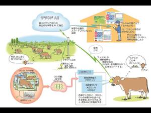 放牧牛を担保とする動産担保融資におけるAIモニタリングシステム「PETER」の有効性検証を開始