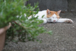 早起きできないなら夕方の猫を狙え! オリンパス「OM-D E-M1 Mark II」で日没猫を撮る