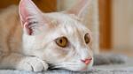 ニコンの新ミラーレス一眼「Z fc」は猫を気軽にサクっと撮れるお散歩カメラ
