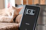ライカ監修で1インチセンサーのスマホ「AQUOS R6」で猫を撮る!
