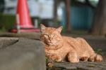 ニコンのミラーレスカメラ「Z fc」で街の猫と出会う