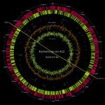 ゲノム編集・ゲノム合成を大衆化できるか?サイバーとフィジカルを媒介する新たな流れ