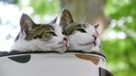 段差を枕に寝転がる猫をローアングルで撮影する