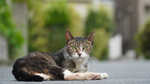 ソニーのVLOGCAM「ZV-E10」を使って4K画質で猫を撮る!