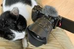猫に乗っかられて動けなくなったのでソニーのVLOGCAM「ZV-E10」で動画を撮った