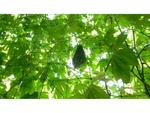 10月10日(日)開催!2021新宿「みどりのカーテン」プロジェクト「土のリサイクル・野菜づくり講座」
