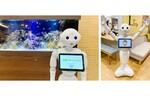 ソフトバンクロボティクスとSOMPOケア、介護施設6ヵ所で人型ロボット「Pepper」の活用トライアルを開始