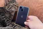 iPhone 13 miniはシネマティックモードも使えて猫撮影が楽しいスマホ